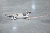 2020/07/12 南港世貿寵物展:DSC_7439 裁切.JPG