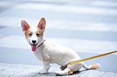 2020/05/31 寵物戶外購物節 @ 台北市信義區興雅路:DSC_6855.JPG