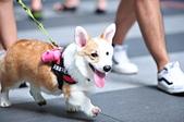 2020/05/31 寵物戶外購物節 @ 台北市信義區興雅路:DSC_6850.JPG