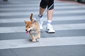 2020/05/31 寵物戶外購物節 @ 台北市信義區興雅路:DSC_6795.JPG