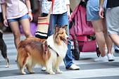 2020/05/31 寵物戶外購物節 @ 台北市信義區興雅路:DSC_6826.JPG