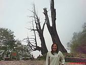 阿卿嫂&大呂相簿歡迎觀賞:塔塔加夫妻樹2009.04.18
