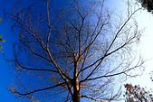 2012-01-24 台南天氣晴之隨手拍:IMG_6327.jpg