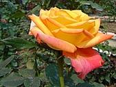 玫瑰:rose001