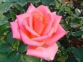 玫瑰:rose005