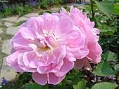 玫瑰:rose010