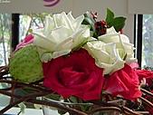 玫瑰:rose021
