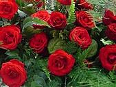 玫瑰:rose022