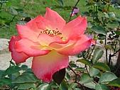 玫瑰:rose023