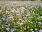 藿香薊:2012-03-24 123.jpg