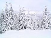 加拿大 Whistler ski trip:昨晚下的雪...