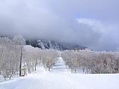 20060225~3/3日本志賀高原:一大早雪道有整理過,有整齊的輪胎壓痕