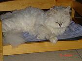 我家的鳥咪:居然會睡床,而且不會到處睡...會認床的貓