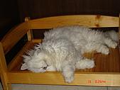 我家的鳥咪:沒有棉被抱....勾住床板意思到了