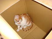 新手育貓日記:090311鑽紙箱
