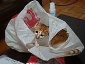 新手育貓日記:090311鑽塑膠袋