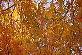 台中大雪山楓紅:照片 2485.jpg