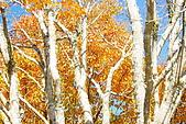 台中大雪山楓紅:照片 2486.jpg