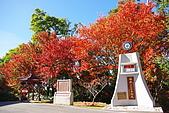 台中大雪山楓紅:照片 2504.jpg