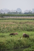 2011-12-13 關渡自然公園.淡水紅毛城:關渡自然公園.淡水紅毛城 009.JPG