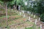 2011-07-15 綠光森林.小烏來風景區:綠光森林.小烏來風景區 015.JPG