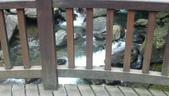 2011-07-13 內洞森林遊樂區:內洞森林遊樂區 009.JPG