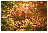 台北奧萬大:IMG_2429w2b.jpg