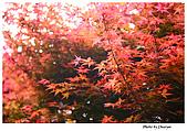 台北奧萬大:IMG_2484w2b.jpg