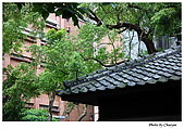 華山藝文園區及其他:IMG_0133w2b.jpg
