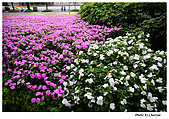 華山藝文園區及其他:IMG_0061w2b.jpg