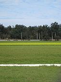 20090208 苗栗後龍好望角:17. 一片綠地.jpg