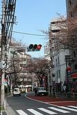 20100327 鶴川 武相莊:04. 街道上的櫻花已含苞待放.JPG