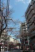 20100327 鶴川 武相莊:06. 兩旁全是櫻花樹.JPG