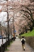 20120406 重返京都:001. 為了櫻花重返京都的第一站.JPG