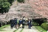 20120406 重返京都:012. 櫻花下的人們~.JPG