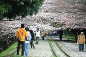 20120406 重返京都:014. 主體相當的突顯.JPG