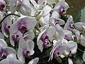 20101114 台北花博初體驗:13. 蘭花應該是出現過最多的花了.JPG