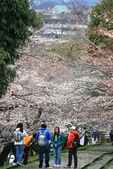 20120406 重返京都:019. 櫻花下的閒聊.JPG