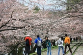 20120406 重返京都:020. 櫻花下的打哈哈~對啦~看這邊就對了~.JPG