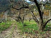 河馬野山農園:DSC06393.JPG