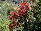河馬野山農園:DSC06395.JPG