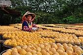 新埔柿餅節外拍:DSC_0391.JPG