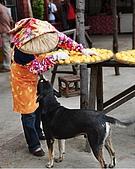 新埔柿餅節外拍:DSC_0266C.jpg