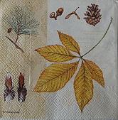 餐巾紙:CIMG3962_大小 .JPG