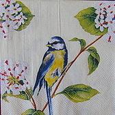 餐巾紙:CIMG7604_大小 _大小 .JPG