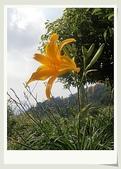 旅遊相片:CIMG8533.jpg