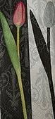 餐巾紙:CIMG3149_大小 .JPG