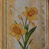餐巾紙:CIMG2547_大小 .JPG