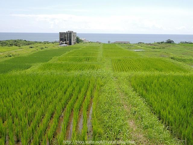 花蓮 (1):64K海稻米 (1).JPG