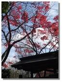 京都秋楓:033.jpg